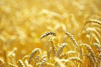 El Gobierno aprueba la distribución de 143,4 millones de euros entre las Comunidades Autónomas para la ejecución de programas agrícolas, ganaderos y de desarrollo rural